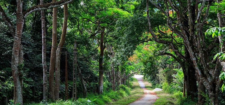 Cuc Phuong National Park Full Day